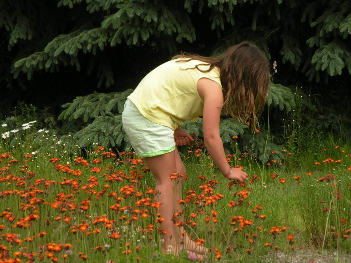 Picking Wild Flowers