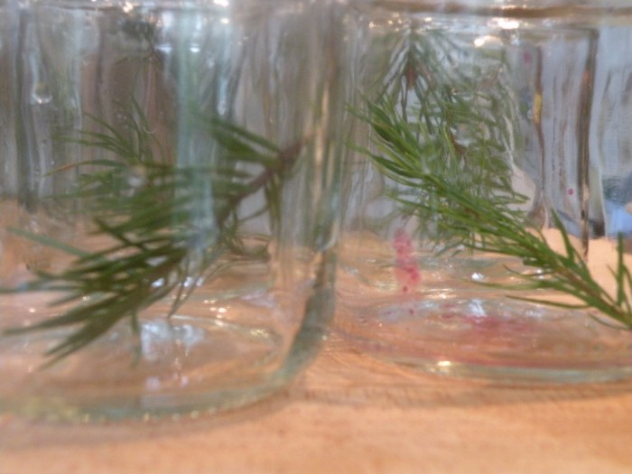 Douglas Fir Tips in Jars Le Meadow's Pantry
