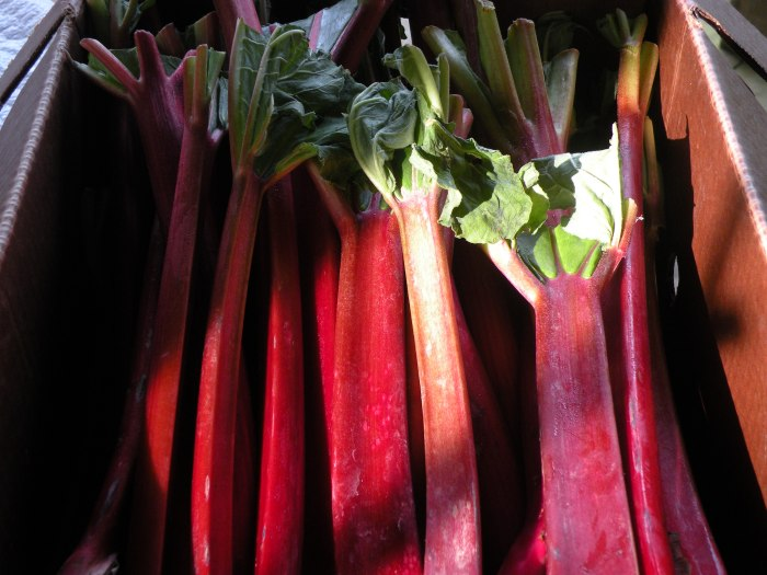 Fresh Local Rhubarb