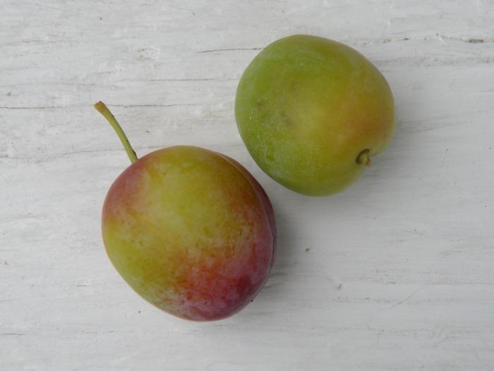 Duo of petite plum