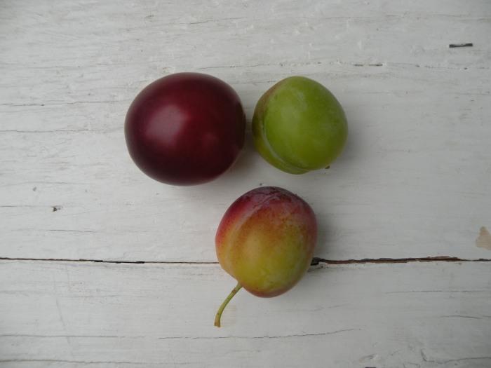 Blushing petite plum